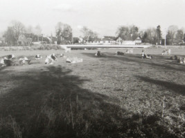 Essendorfer Wiese vor Bebauung (heute: Wendelsteinstraße)