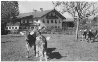 Beilhof, Wolfratshausener Straße