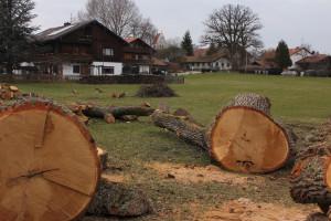 Baumstücke am Argeter Weg